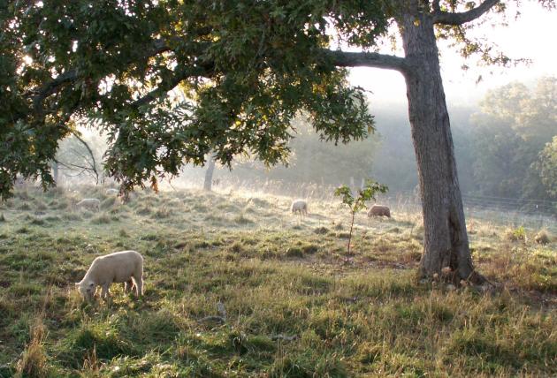 Why Babydolls? – My Little Sheep